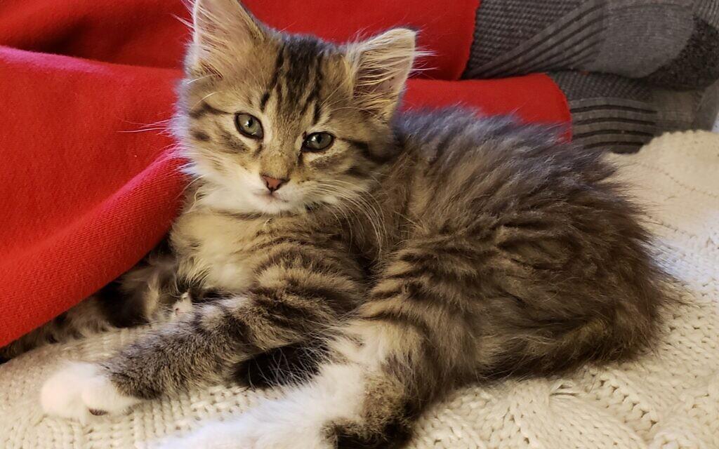 Doozy - Martha Jo Katz's 3-month-old Cat.
