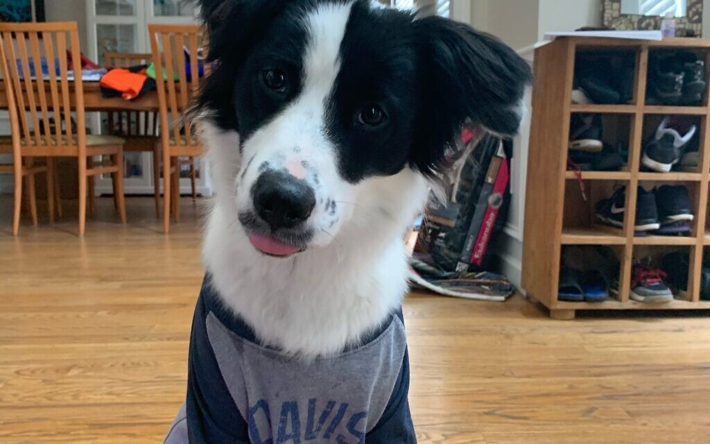 Chance - Stacy Alexander Morris' 2.5-year-old Border Collie Mix.