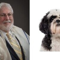 Emeritus Rabbi Shalom Lewis Shares his experience with a beloved pet.