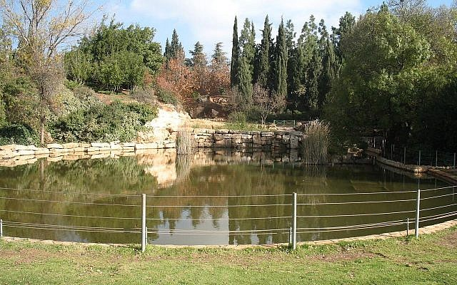 The lake at Wohl Rose Garden, in Jerusalem. (Wikipedia)