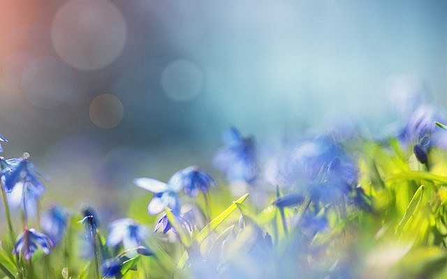 Illustrative. Flowers. (iStock)