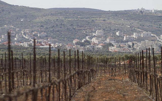 Illustrative. A vineyard in the West Bank. (AP Photo/Dan Balilty)
