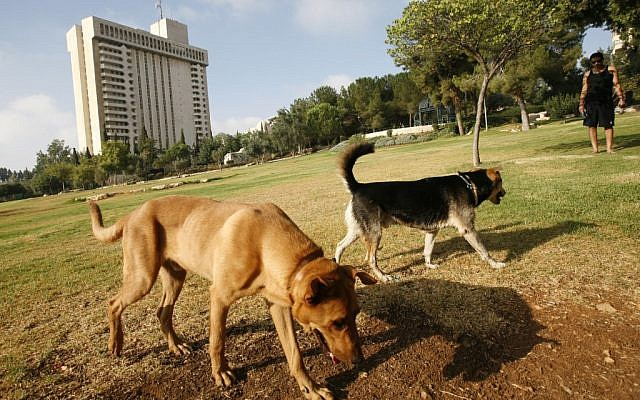 Jerusalem hopes to ensure that after dogs enjoy the park, people can too (photo credit: Miriam Alster/Flash90)