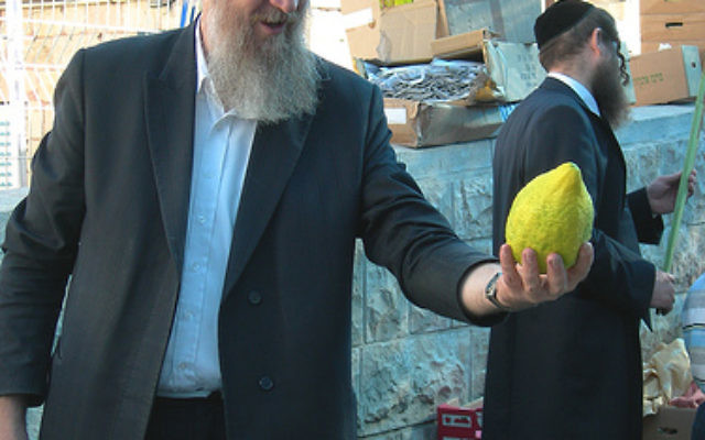 How big is YOUR etrog?
