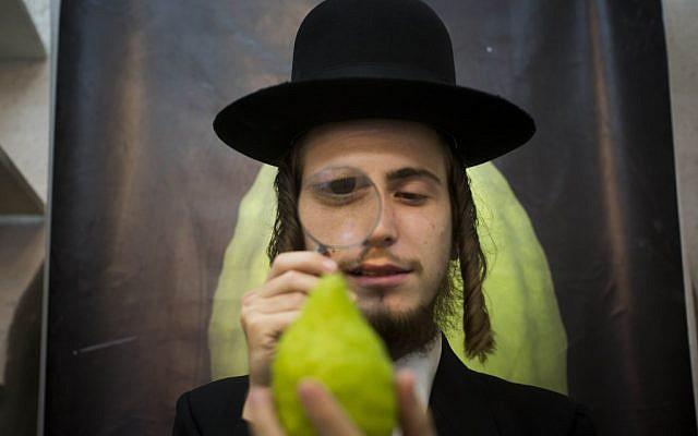 Illustrative: An ultra-Orthodox man examines a citron (etrog) in Jerusalem (photo credit: Yonatan Sindel/Flash90)