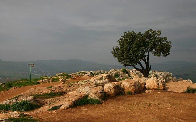 Mount Arbel carob overlook (photo credit: Shmuel Bar-Am)
