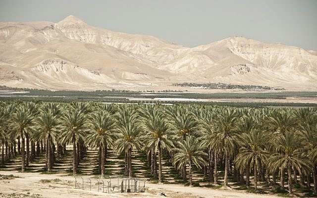 The Jordan Valley. (CC BY Trocaire, Flickr)
