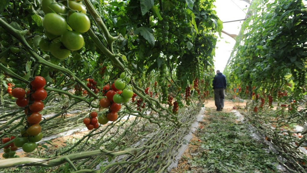 Burgeoning footprint of Israeli agricultural technologies in