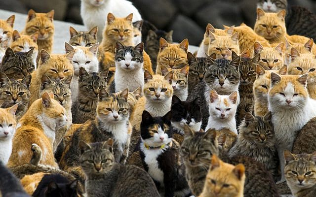 Concerning Cat Population in Israel | Michael Daily | The Blogs