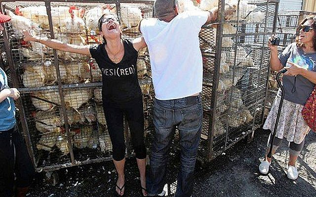 "Chickens being killed for a so called ""good cause."""