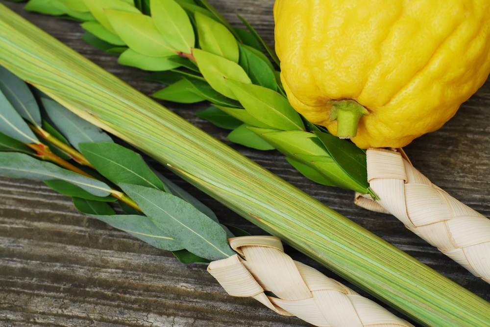 When the 4 species of Sukkot create a symphony