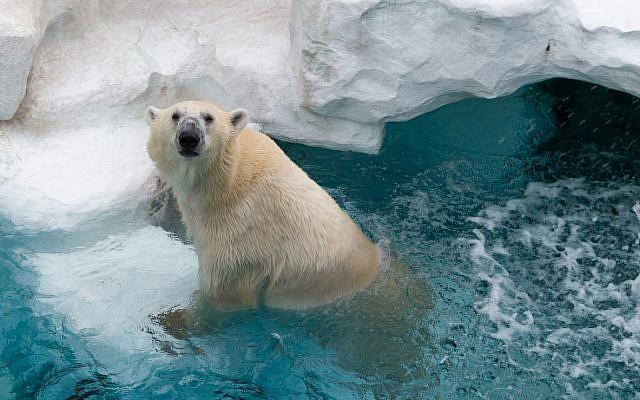 Illustrative. Polar bear in zoo. (iStock)
