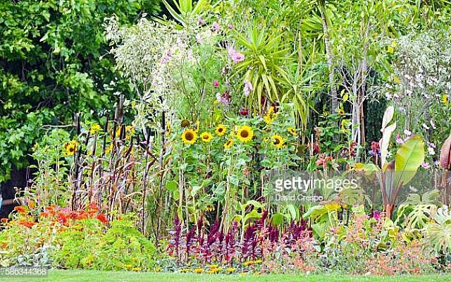 View of the vegetation and the flowers at a park in Dublin.