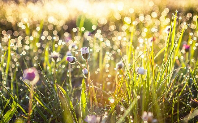 Illustrative. Summer grass field. (iStock)