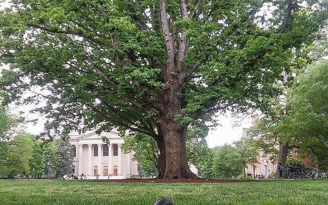 A tree at the University of North Carolina at Chapel Hill (2018).