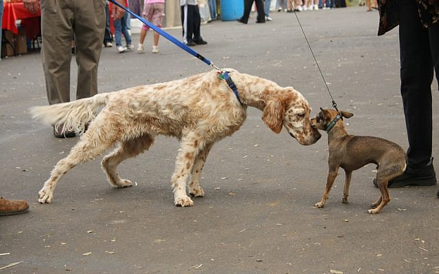 Dogs getting to know each other. (CC-BY-SA aresauburn,™ Flickr)