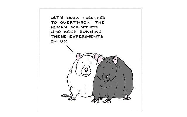 We can learn from the empathy of rats how to expand our own empathy. (Source: Henry Garrett, New York Times)