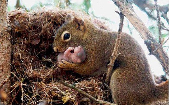 """Photograph by Alexander Bogomolny z""""l, posted April 5, 2013. Original caption: 'Squirrels are actually very kind to each other and will adopt abandoned baby squirrels if they notice a relative has not come back for them.'"""