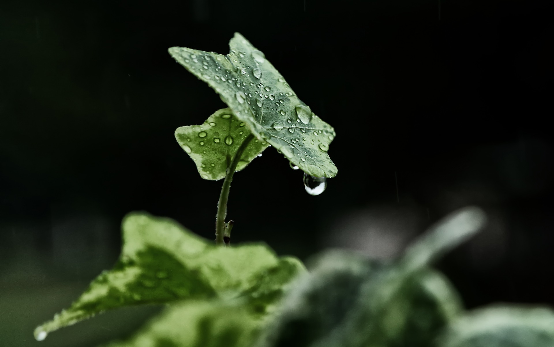 The ecological imperative (Shofetim 5779)