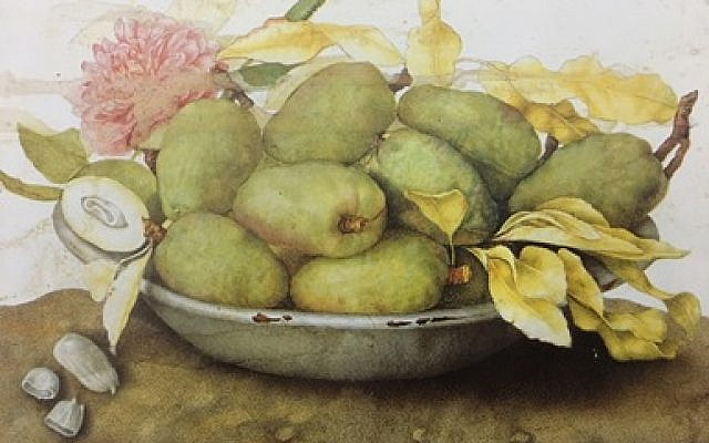 Plate of loquats, almonds and a rose by Giovanna Garzoni
