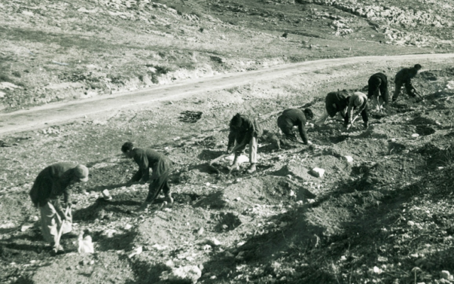New immigrants, planting new forests in the Judean Hills. (courtesy, KKL photography archive)