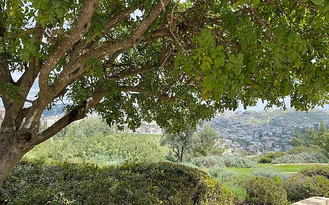 The Peace Forest in Jerusalem
