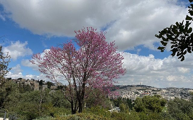 Scenery from the Land of Israel