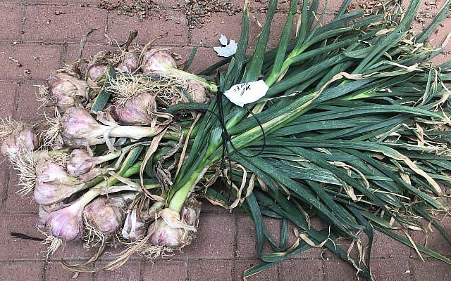 10-kilo bushel of garlic (Amanda Borschel-Dan)