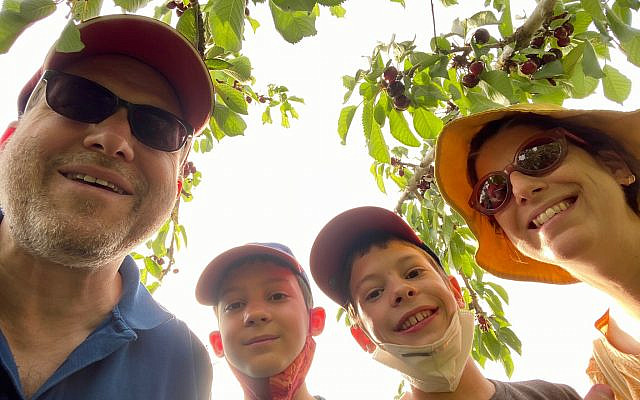 Jessica Steinberg's family: husband Daniel, sons Ziv (second from left), Lev, and Jessica at Ramat Rachel's cherry orchards, on May 20, 2020. (courtesy, Daniel Laufer)