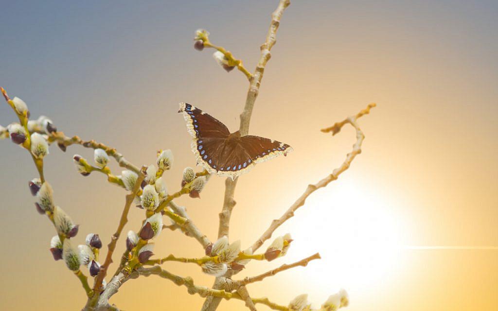 Butterfly. (iStock)