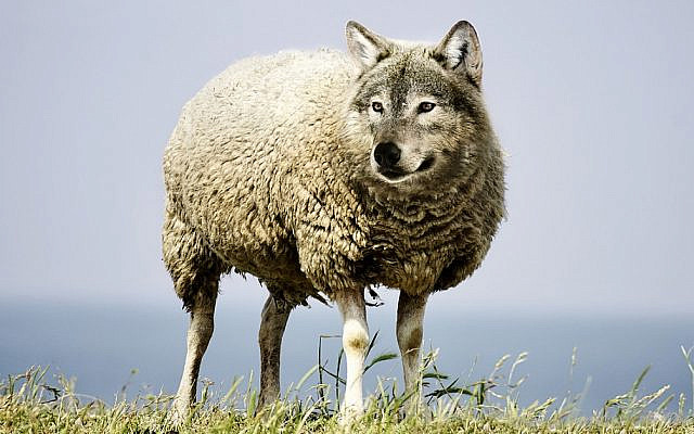 The metaphor of the wolf in sheep's clothing is a symbol of the fact that discernment is extremely necessary along the path to wisdom [Image by Sarah Richter from Pixabay]