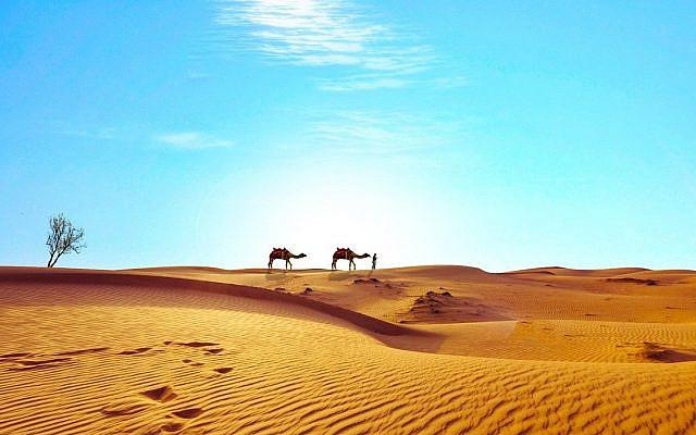 https://pixabay.com/photos/egypt-sahara-desert-dry-camels-1980586/