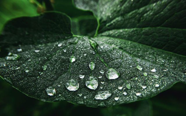 Dew drops on a leaf (Getty Images)