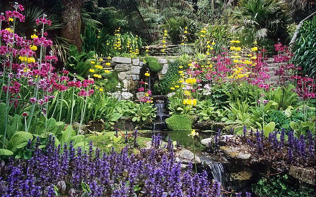 Trebah Gardens, Nr Falmouth, Cornwall, England: Situated in a sheltered valley in the far south west of Cornwall, this garden has a mild and often frost free micro climate. Running down the valley is a delightful small stream that is superbly planted with candelabra Primula and Ajuga.  It is bordered by rhododendrons, Dicksonia, Gunnera, Hydrangea and other moisture loving plants. In spring the stream is a really colourful spectacle.   Other water features in this garden include a koi pond and sizeable lakes at the bottom of the valley – great for reflections and particularly nice in late summer when the hydrangeas are out. Trebah gardens are exceptionally well planted and maintained. They are one of my favourite gardens in the far south-west of the UK.   The use of water in English Gardens:  Water has long played an important role many UK gardens. Some of the best English gardens have been built around natural water features, such as streams running down secluded valleys or tranquil pools in a rural setting.   Many of the grand English landscape gardens use water on a very large scale indeed, often creating artificial lakes that appear to be natural features of the landscape. Other gardens use water on a smaller scale with detailed, intimate planting around a brook or small pool. Even a small fountain or water feature adds a sense of movement to a garden.  However water is used in a garden, it adds another important element to garden design. Large flat reflective surfaces give a sense of peace and tranquillity. Moving water bring dynamism and sound – difficult to resist on a hot summer afternoon. Incorporating water into a garden also provides an ideal environment for a wide variety of moisture loving plants, many of which have architectural foliage and provide great structure too.    I hope the photos in this set will be of interest to anyone studying garden design or just seeking inspiration for using water in their own garden.  ©  2014 ukgarde