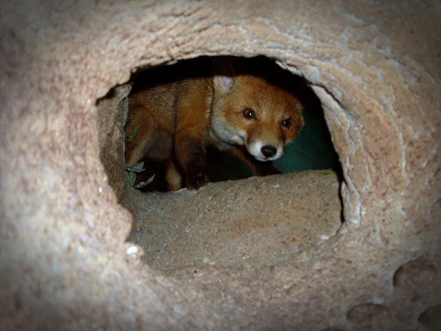 Are we all 'atheists in the foxhole'?   Soli Foger   The Blogs