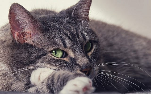 Illustrative. Cat with green eyes. (iStock)