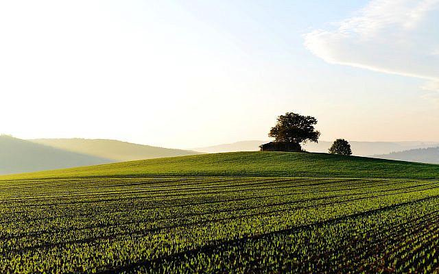 https://www.maxpixel.net/Fog-Field-Grass-Landscape-Fields-Green-Foggy-3741871