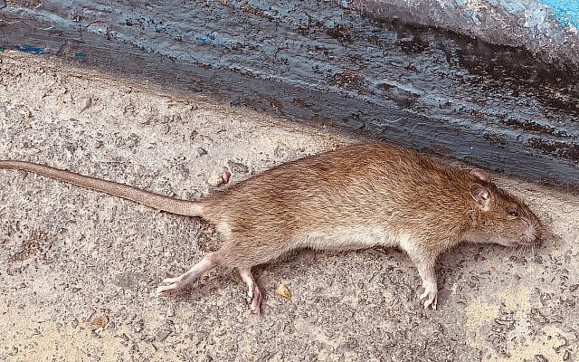 They called me a rat in Moscow. (Marc Kornblatt)