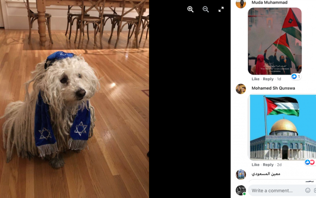 Mark Zuckerberg's post of his dog drew thousands of angry comments. (Screenshot via Jewish News and JTA)