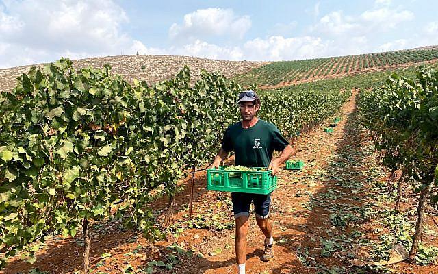 Israeli farmer preparing for Shmita