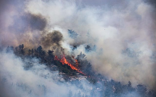 Smoke rise from burnung trees after a large forest fire broke out west of Jerusalem. Israeli police said that evacuations had begun in several villages affected by the flames and roads were being blocked off.