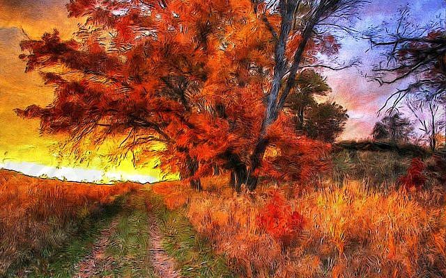 https://pixabay.com/illustrations/autumn-walks-outdoor-autumn-season-4719478/