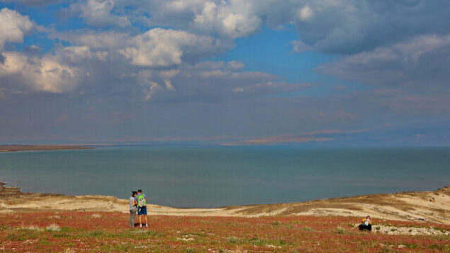 Israelis enjoy the blooming of flowers in the Dead Sea, February 20, 2020. Photo by Yaakov Lederman/Flash90 *** Local Caption *** טבע ים המלח פריחה פרחים נהנים ישראלי ישראלים