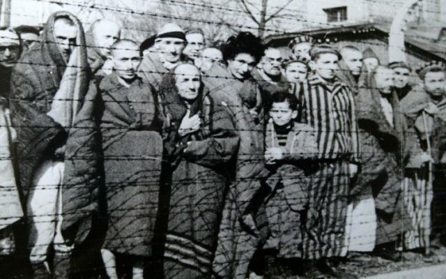 Prisonniers à Auschwitz-Birkenau à la Liberation, en janvier 1945 (Crédit : Wikimedia Commons)