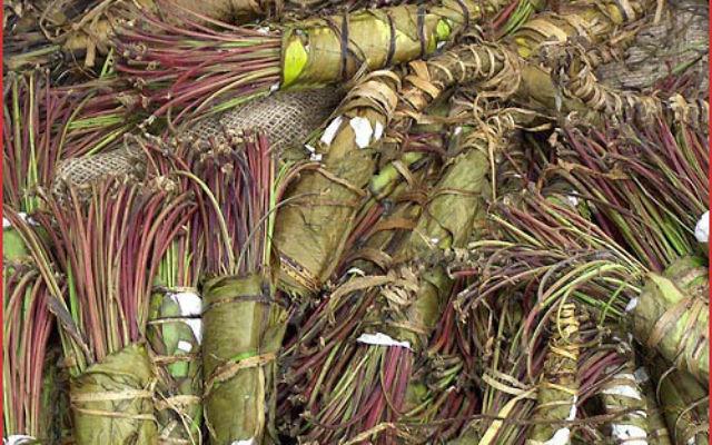 Des feuilles de khat (Crédit : SS BY-SA 3.0, by Abalg, Wikimedia Commons)
