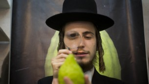 An ultra-Orthodox man examines a citron (etrog) in Jerusalem, September 27 (photo credit: Yonatan Sindel/Flash90)