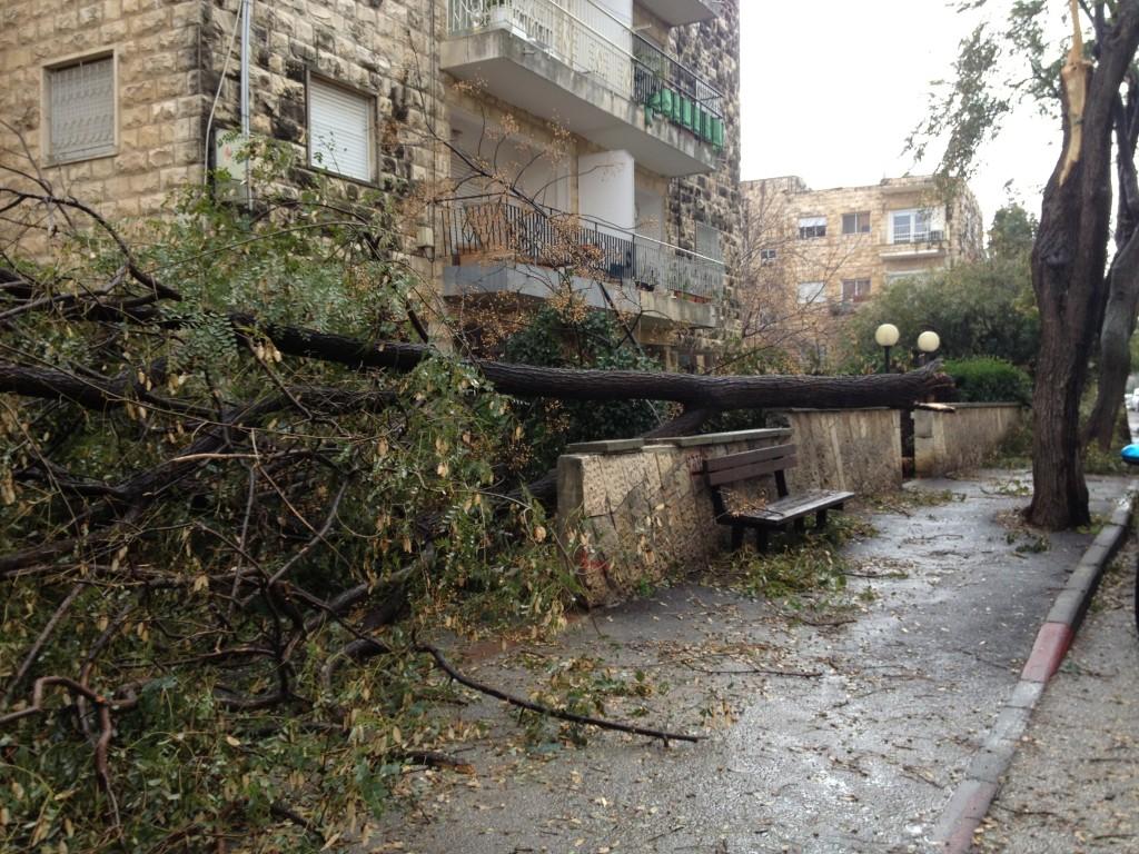 A fallen tree on Shalom Yehuda Street in Jerusalem's Talpiot neighbrohood (photo credit: Jessica Steinberg/The Times of Israel)