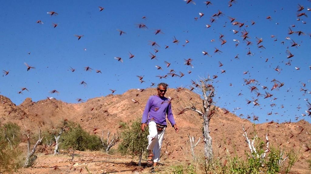 A locust swarm near Eilat in 2004 (photo credit: Yehuda Ben-Itah/Flash90)