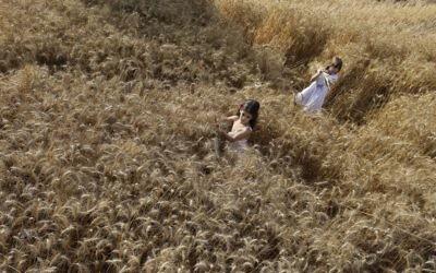 Un champ de blé au Kibbutz Nahal Oz, près de la frontière avec Gaza (Crédit : Tsafrir Abayov/Flash 90)