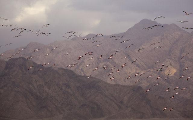 Vue sur les alentours d'Eilat (Crédit :  Matanya Tausig/Flash90)